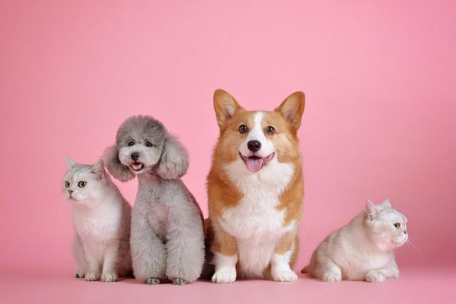 Zoothérapie : Quand les animaux nous viennent en aide !