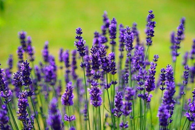 Découvrez les plantes médicinales pour une santé de fer au naturel !